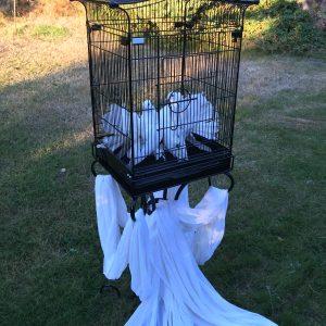 White Doves in Cage